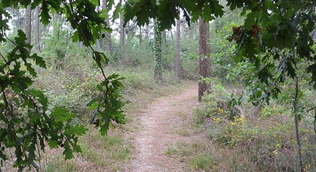 chemin sur le sentier du petit poucet proche de mussidan