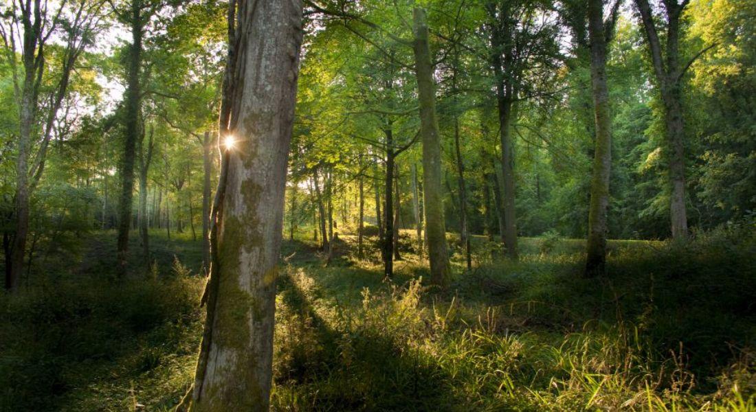 syndicat intercommunal de gestion forestière sur la commune de mussidan